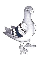 Pigeon Mascot